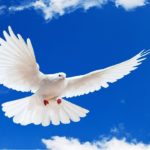 Голубь — символ мира